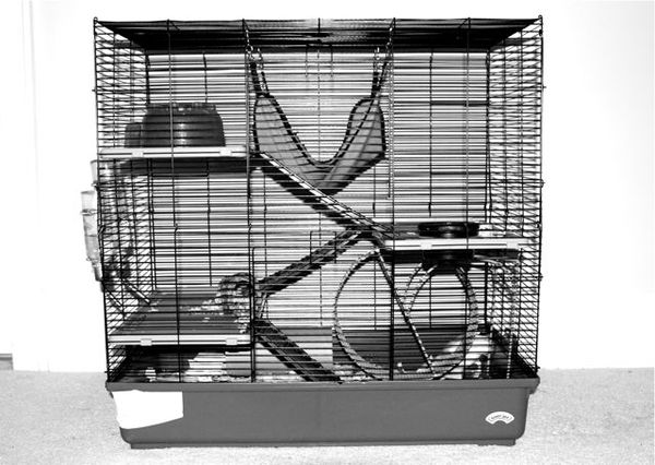 kellicrowe pet rats mom the rats broke out of the cage. Black Bedroom Furniture Sets. Home Design Ideas